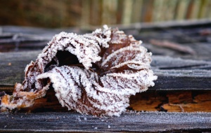 ice, cold, leaf, tree, frozen, winter