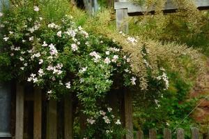 ILLAR, plot, květina, květ, okvětní lístek, list