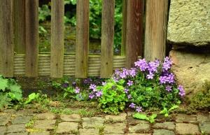 flower, flowering, leaf, fence, wood, stone