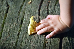 Baum, blatt, hand, herbst, hand, kind