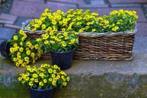 flower, basket, blossom, flower pot, grass