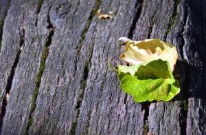 Leaf, tree, natur, tekstur