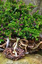 Flor, florecimiento, planta, hoja, raíz