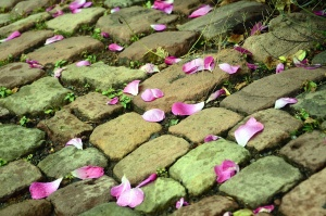 stone, road, petal
