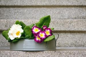 Treppe, Blume, Blüte, Blatt, Blumentopf