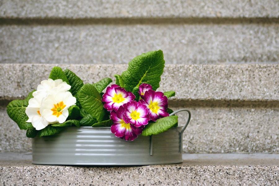 stairs, flower, flowering, leaf, flower pot