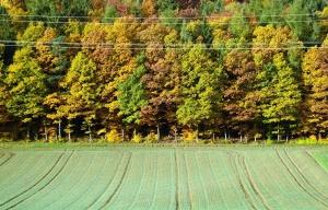 Feld, Ernte, Wald, Feld, Elektrizität