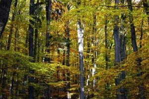 forest, wood, nature, branch, leaf, summer