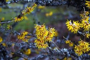 Fiore giallo, arbusti, fioritura, fiori, ramo