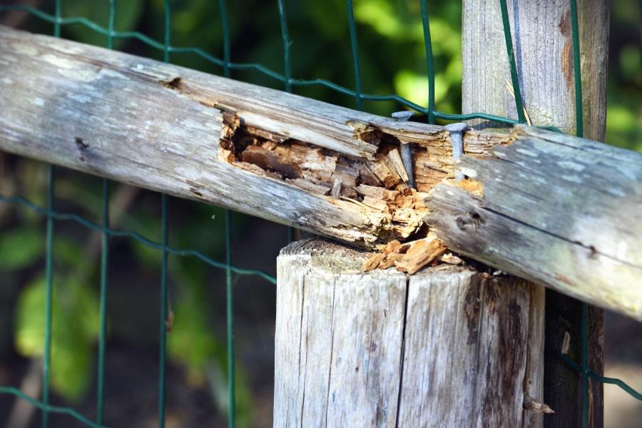 울타리, 나무, 금속, 네트워크, 네일