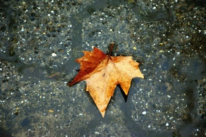 leaf, water, concrete, wet, reflection