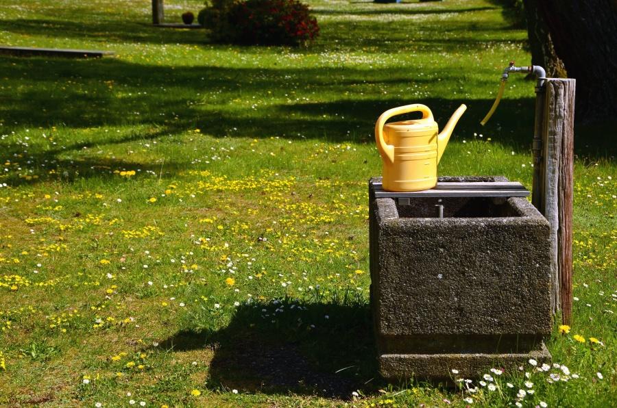 Robinet, eau, herbe, arbre, fleur, village