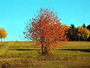 Otoño, hierba, madera, hojas, colores, cielo, paisaje
