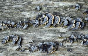tree, moss, bark, texture