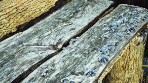 tree, bench, moss, bark, texture