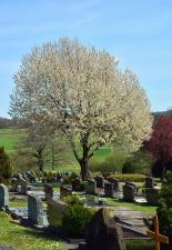wood, monument, grass, cross, graveyard