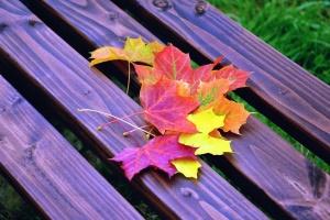 Otoño, colores, colorido, hoja, madera, banco