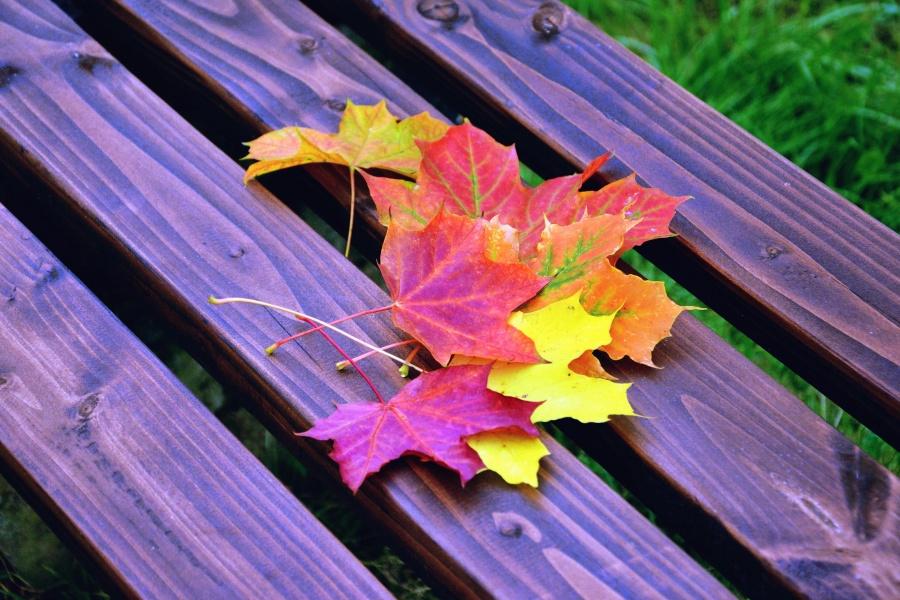 autumn, colors, colorful, leaf, wood, bench