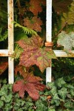 leaf, ivy, fence, metal, plant