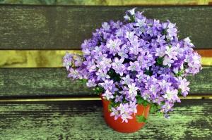 Fleur, pot de fleurs, pétale, plante, bois, banc