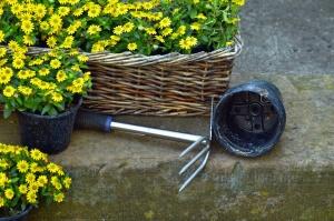 Houe, fleurs, panier, pot, fleur, pétale