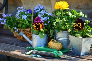 flower, flowering, plant, pot, rope, basket