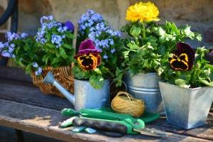 Blume, blüte, pflanze, topf, seil, korb
