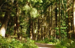road, tree, forest, grass, mountains