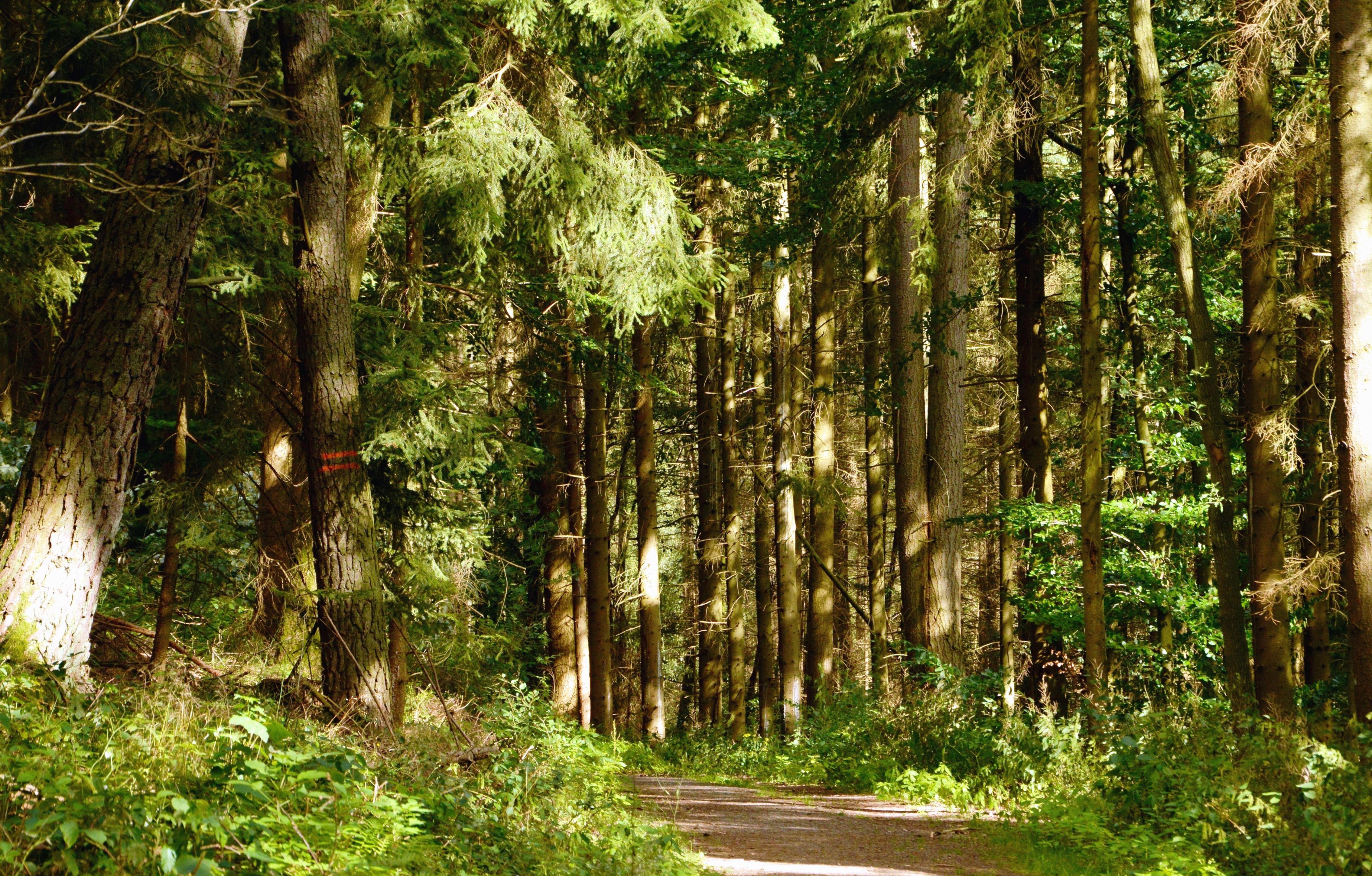 Très Image libre: Route, arbre, forêt, herbe, montagnes ZA77