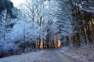 road, forest, wood, winter, snow, cold, frozen