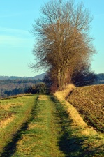 Camino, árbol, campos, cielo, montaña