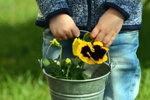 boy, bucket, flower, flowering, petal, plant