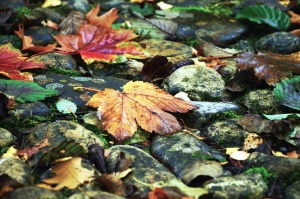leaf, plant, autumn, color, colorful