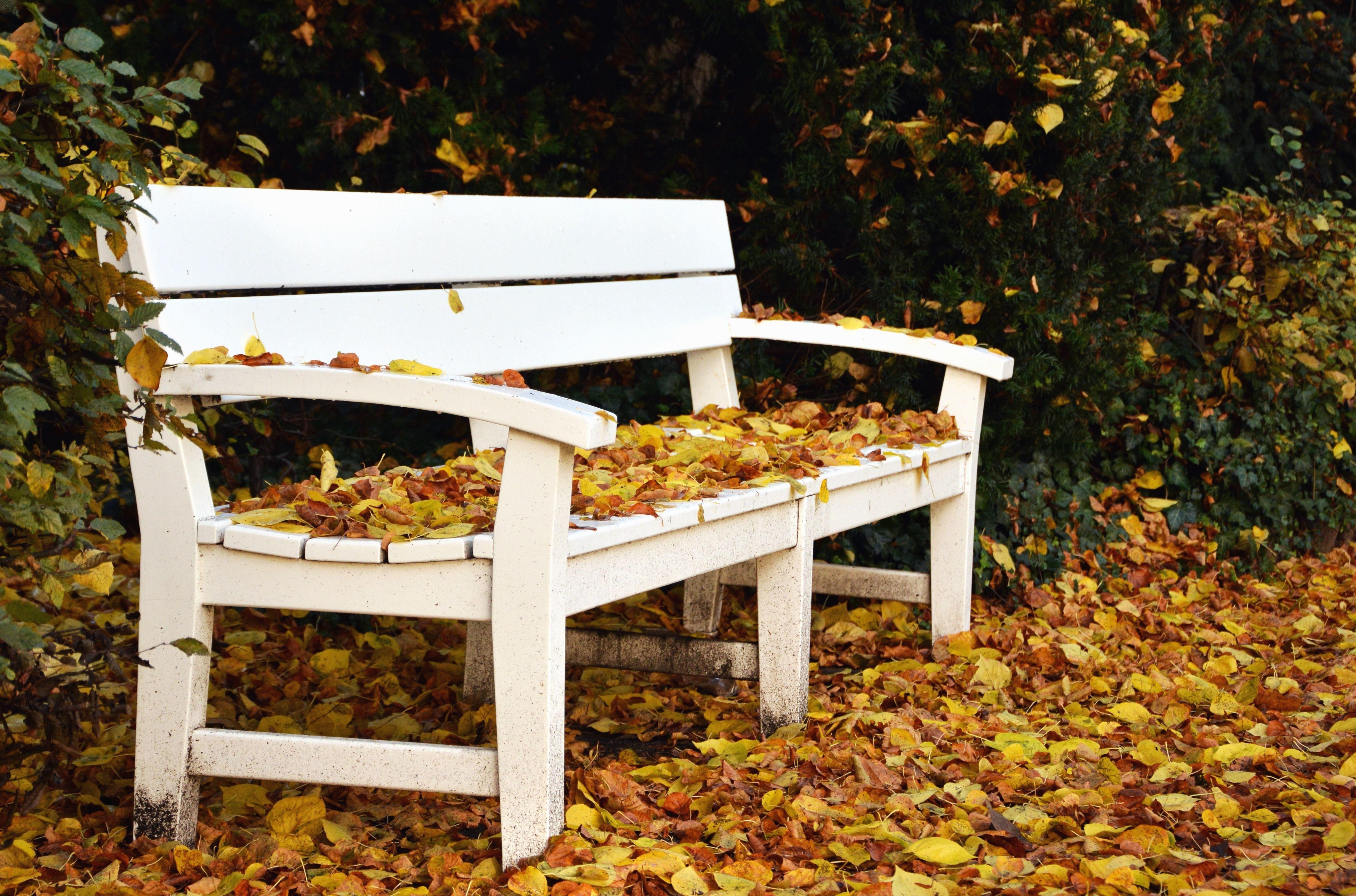 image libre banc feuille automne arbre parc. Black Bedroom Furniture Sets. Home Design Ideas