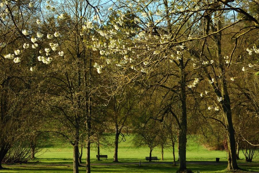 Fria Bild Träd Gräs Skog Park Bänk