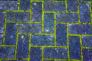 Ladrillos, pavimento, ladrillo, musgo, camino, planta, textura
