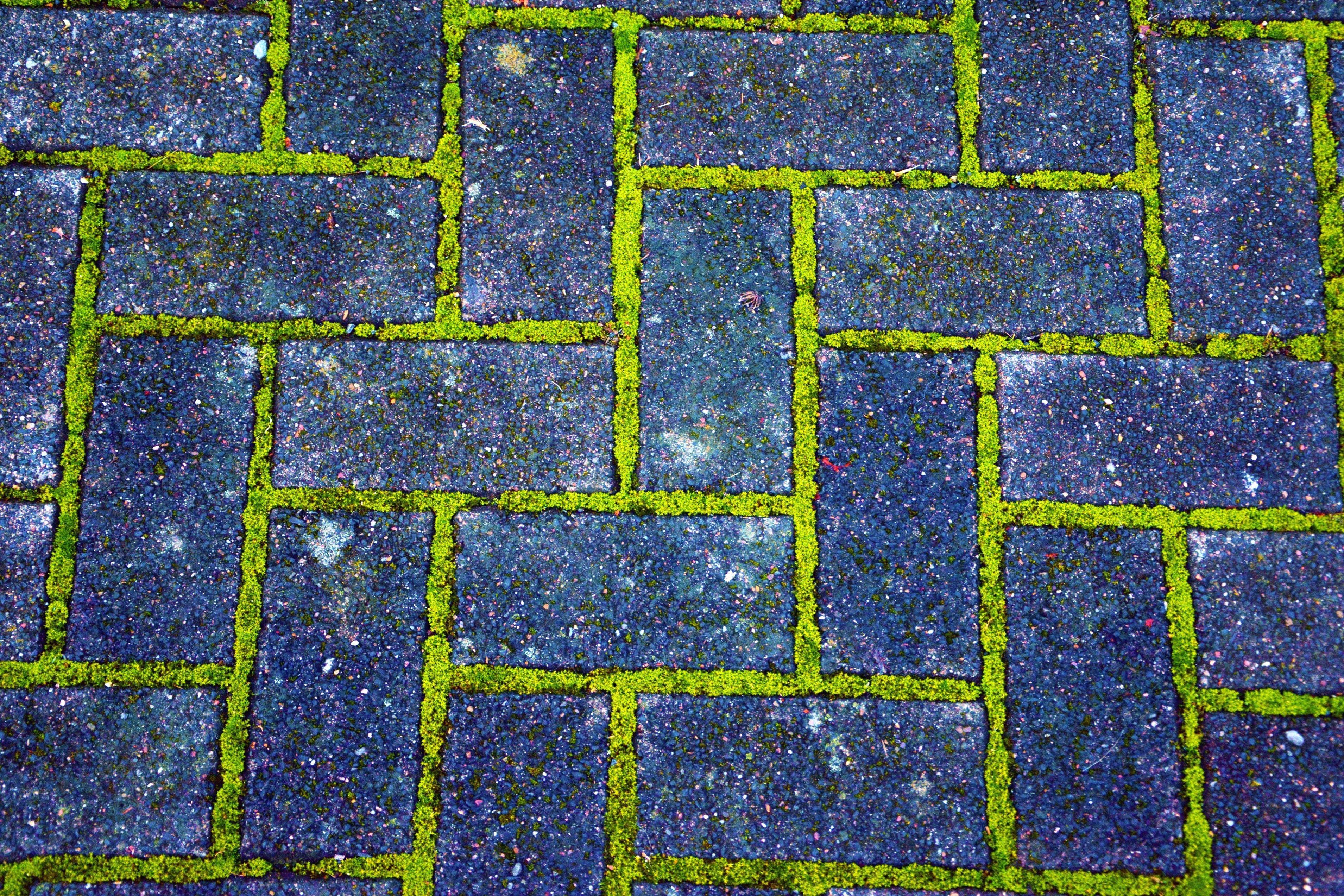 kostenlose bild: ziegel, pflaster, ziegel, moos, pfad, pflanze, textur, Gartenarbeit ideen