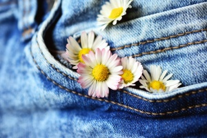 daisy, flower, petal, jeans, cloth, pants