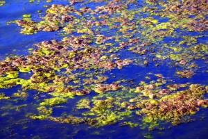 воды, листья, осень, отражение, мокрые