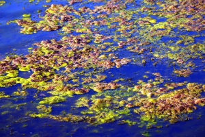 vand, blade, efterår, refleksion, våd