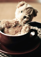 Taza, oso de peluche, juguete, cerámica