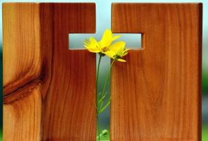 Croix, arbre, fleur, christianisme, religion