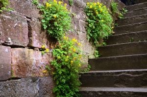 stairs, stone, wall, historical, plant