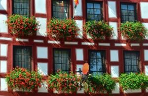 Fiore, fiore, casa, costruzione, architettura, finestra, facciata