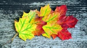 ağaç, yaprak, tablo, bitki, Sonbahar, renk