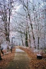 road, winter, wood, leaf, cold, frozen, bench