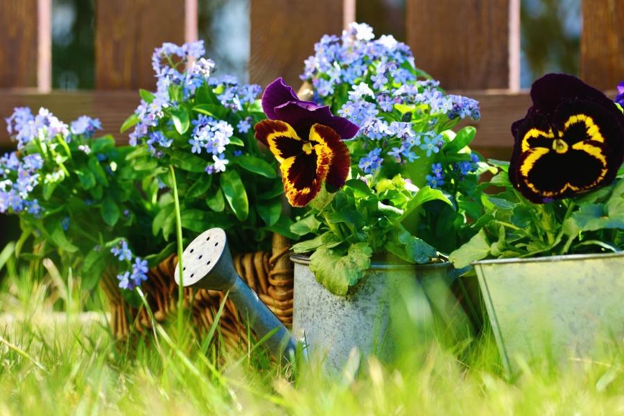 Irrigazione, fiore, fioritura, petali, recinto, erba