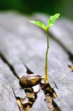 plant, seed, wood, germination, leaf, nature