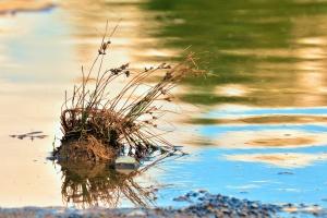 Eau, lac, herbe, plante, reflet