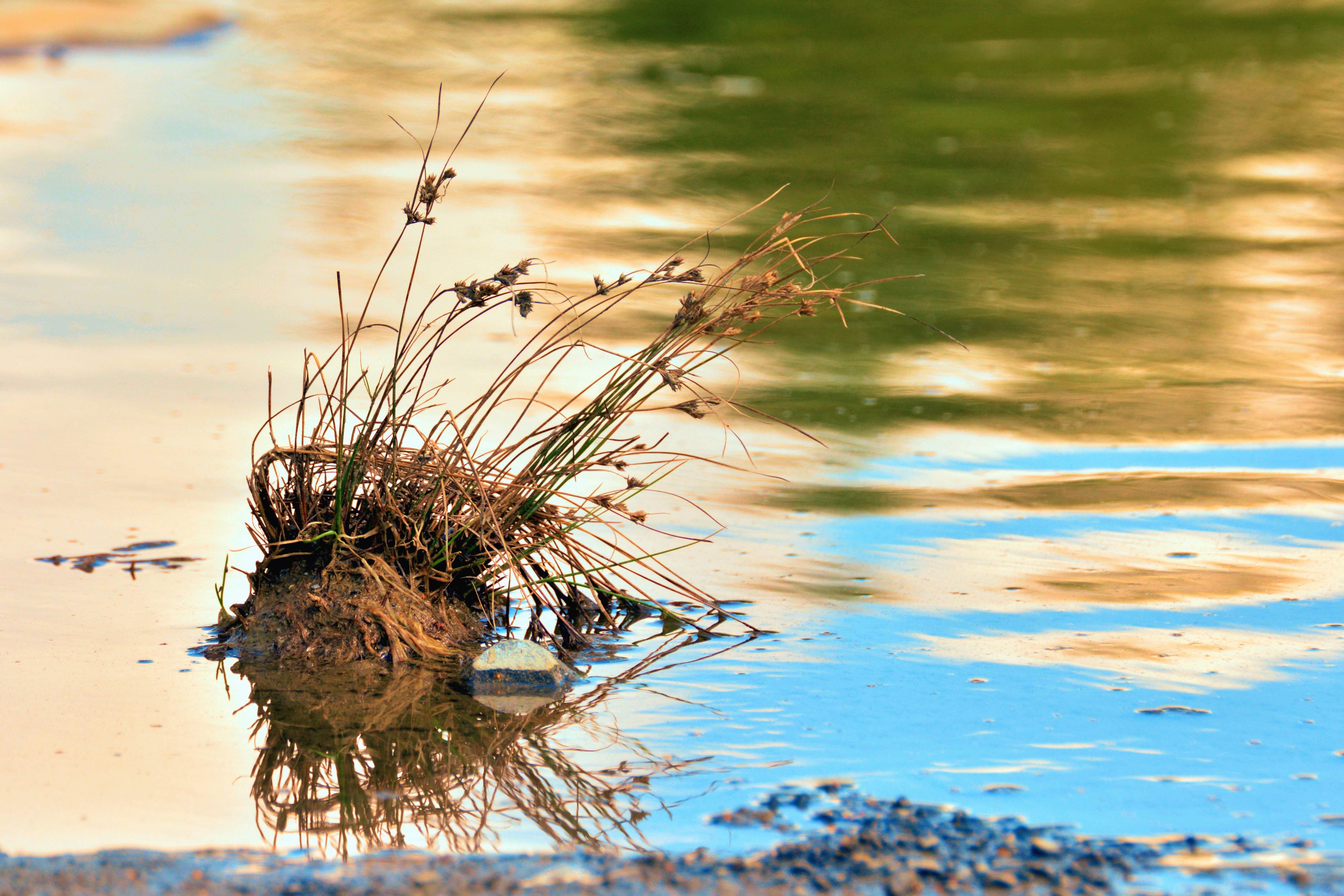 ежик отражение в воде стихи фото углом выполняется виса